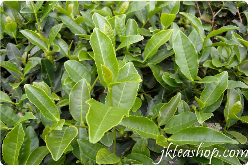 tikuanyin tea 3