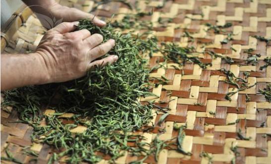 Lapsang Souchong Tea Rolling